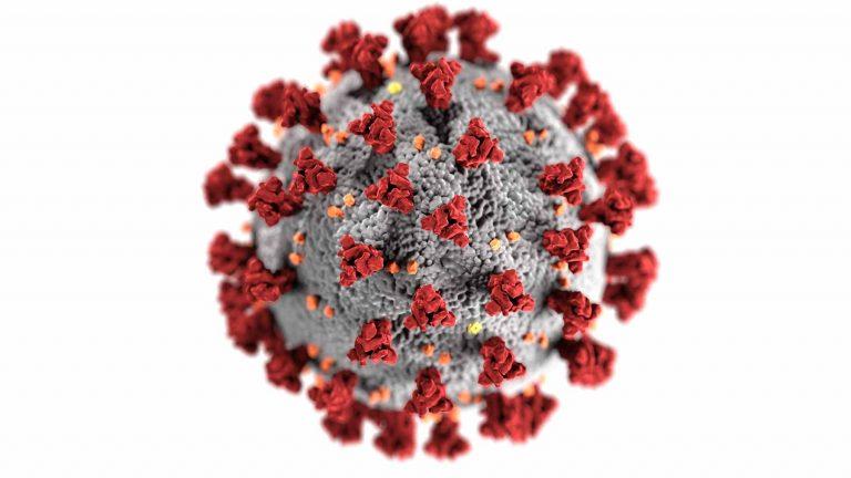 A coronavirus cell