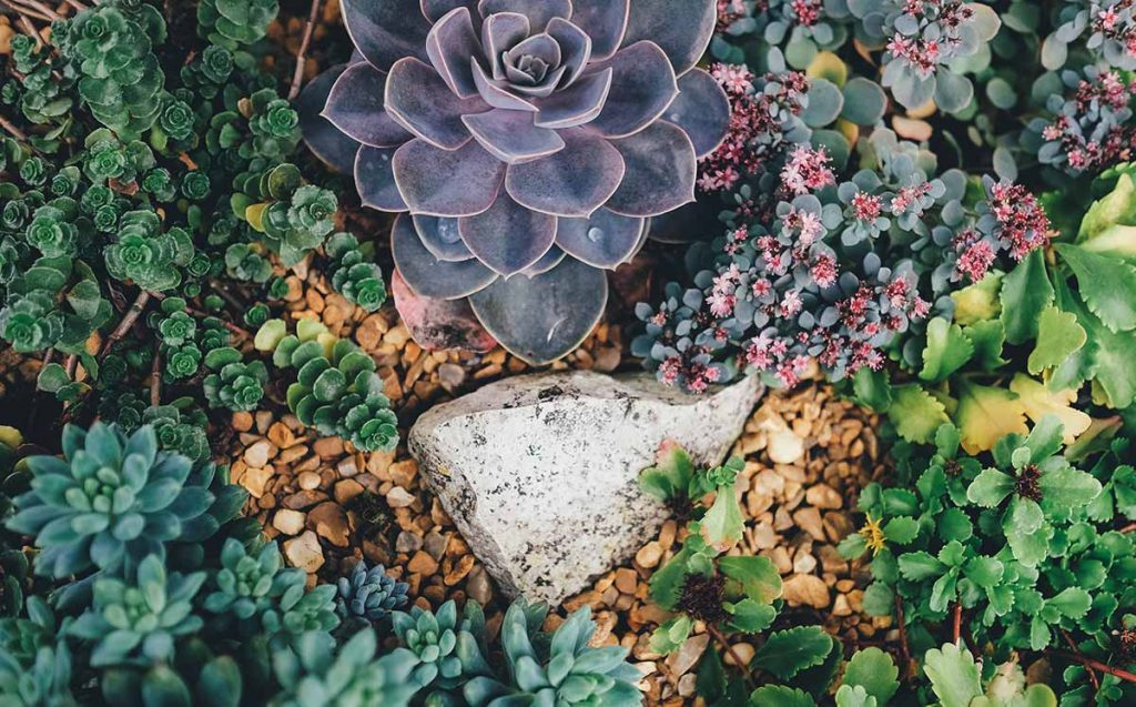 A garden area with succulents and rocks